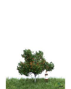 Løvtrær, , MBR51-2304