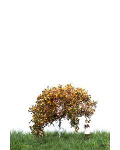 Løvtrær, , MBR52-2304