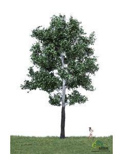 Løvtrær, , MBR51-2405