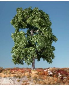 Løvtrær, Lønn, 1 Stk Stor, MIN230-12